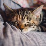 愛猫が尿路結石に!兆候と療養について紹介